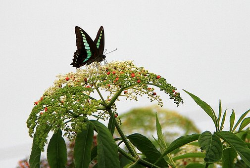 Nature, Leaf, Plant, Flower, Garden, Butterfly, Honey