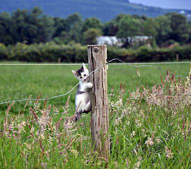 Nature, Grass, Animal, Mammal, Animal World, Ireland