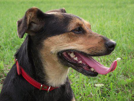 Dog House, Animals, Charming, Pets, Mammals, Language
