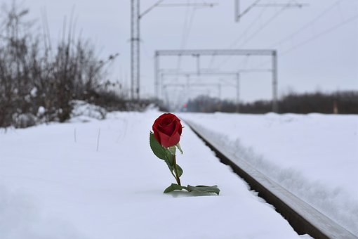 Red Rose In Snow, Love Symbol, Railway, Lost Love