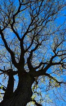 Tree, Branch, Nature, Landscape, Wood, Season, Park