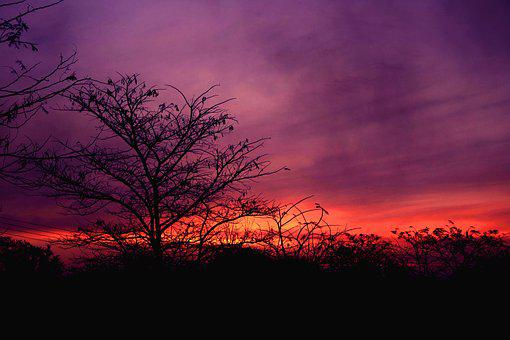 Tree, Landscape, Nature, Silhouette, Sunset, Evening