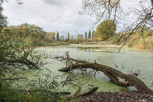 Leinemasch, Laatzen, Waters, Nature, Tree, River