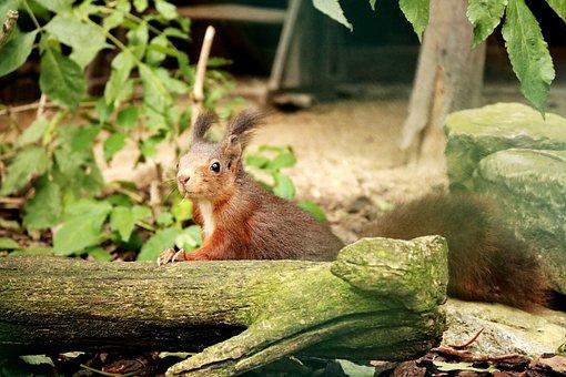 Wood, Nature, Animal World, Mammal, Leaf, Tree, Animal