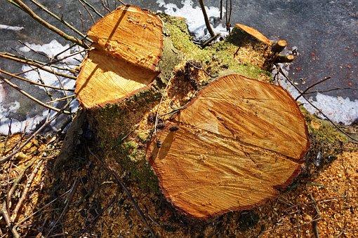 Stump, Wood, Tree, Chopped, Sawed, Chopped Down