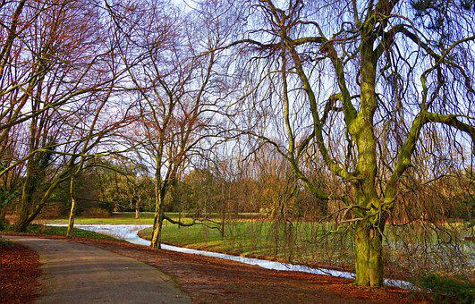 Landscape, Footpath, Trees, Bare Trees, Winter, Moat