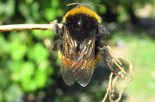 Nature, Insect, Anthophila, Animalia, Wild Life