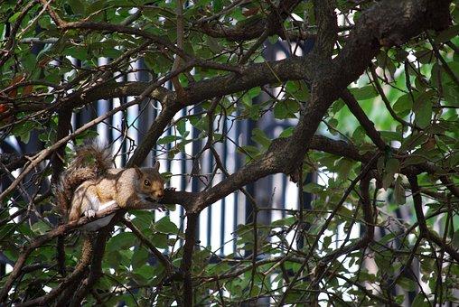 Tree, Nature, Wildlife, Outdoors, Wood, Animal, Branch