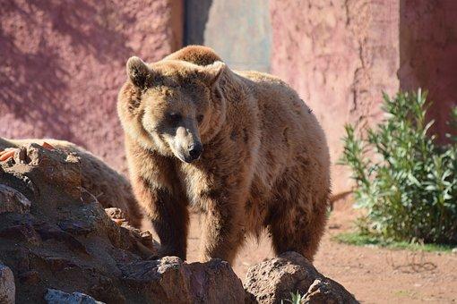 Greece, Athens, Attica, Zoo Park, Bear, Animal
