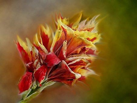 Flower, Nature, Flora, Outdoors, Closeup, Gladiolus