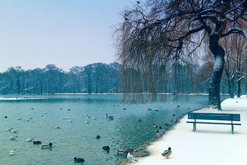 Tree, Lake, Ducks, Bank, Nature, Waters, Winter, Snow