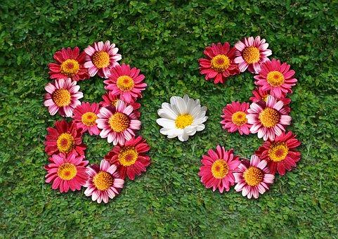 Eight Months Three, Decorate, Background, Flower, Neck
