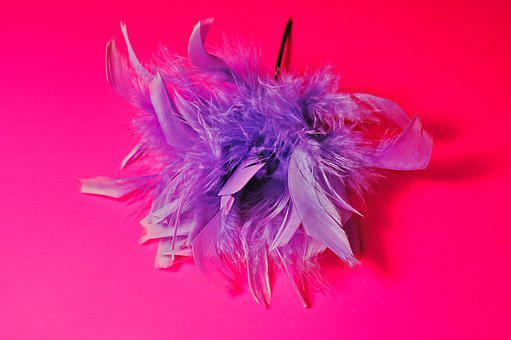 Feather, Feather Corsage, Corsage, Decoration, Fashion