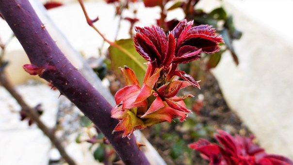 Nature, Plant, Bud, Flower, Leaf, Colorful, Foliage