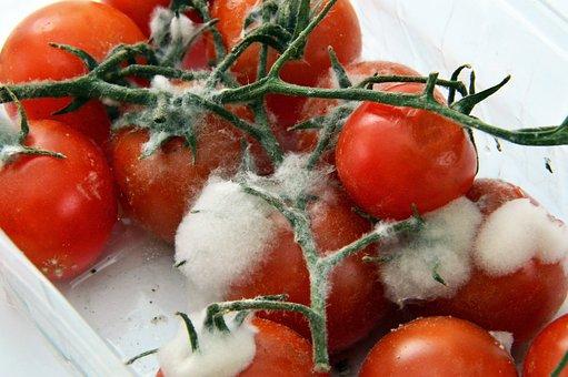 Food, Tomatoes, Healthy, Vegetables, Fruit