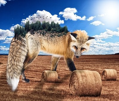 Nature, Animals, Fox, Wild, Animal, Fur Leather