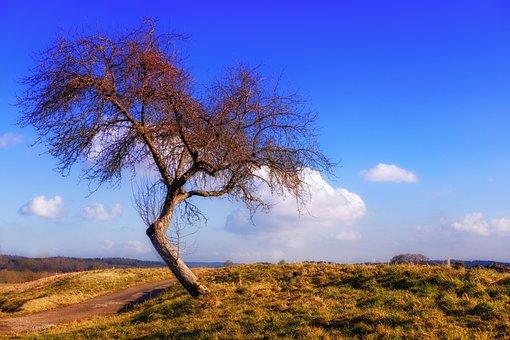 Tree, Kahl, Bent, Kink, Askew, Landscape, Nature