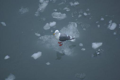 Water, Outdoors, Sky, Travel, Cold, Ice, Nature, Bird