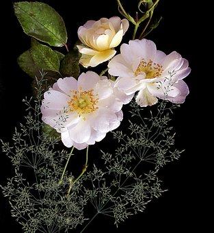 Flower, Plant, Nature, Leaf, Petal, Garden, Floral