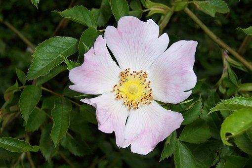 Plant, Flower, Blossom, Bloom, Nature, Leaf