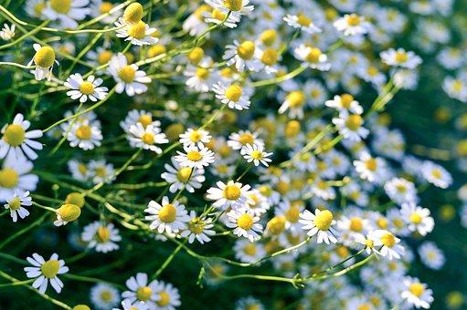 Flowers, Natural, Spring, Plant, White, Gardening