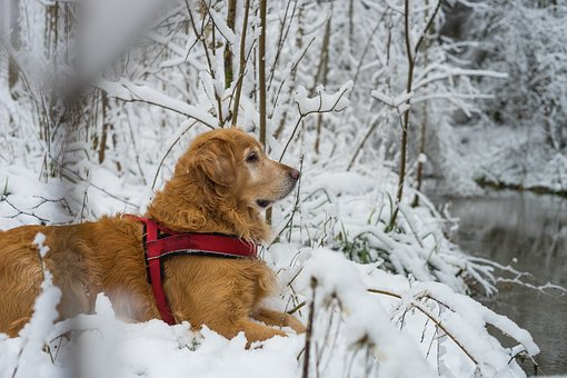 Dog, Pet, Snow, Winter, Cold, Nature, Tree, Landscape