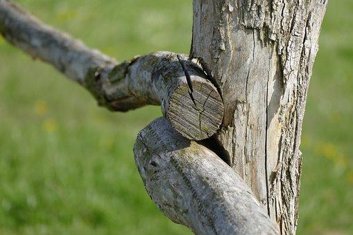 Wood, Nature