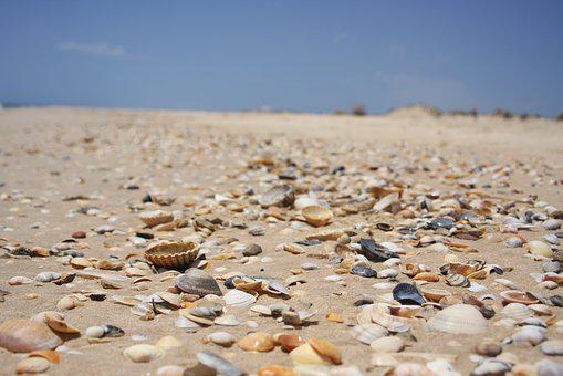 Sand, Beach, Nature, Coast, Sea, Mussels, Holiday