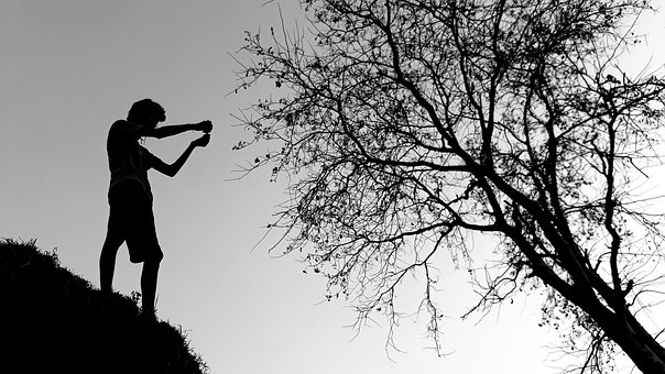 Tree, Silhouette, People, Branch, Nature, Landscape