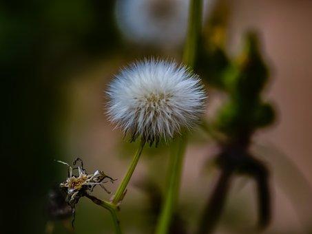 Flower, Flora, Nature, Spring, Fragile, Cyprus