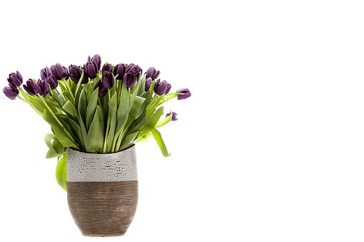 Tulips, Flowers, Spring, Clear, Easter, Violet, Bouquet