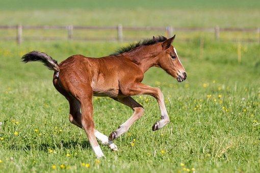 Grass, Field, Meadow, Mammal, Animal, Horse, Foal, Jump
