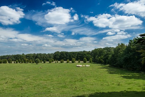 Panoramic, Nature, Landscape, Field, Meadows