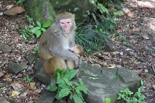 Monkey, Wildlife, Nature, Wood, Mammal, Macaque