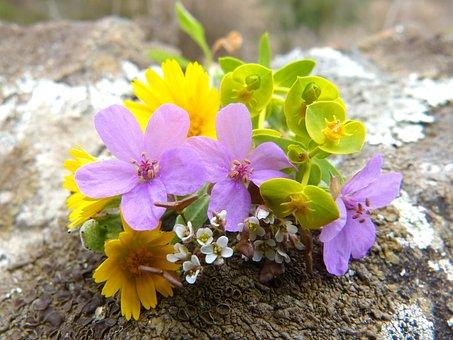 Flowers, Corsage, Wild Flowers, Nature, Plant, Floral