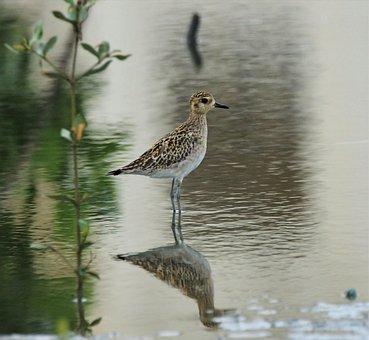 Bird, Wildlife, Nature, Marsh, Outdoors, Animal