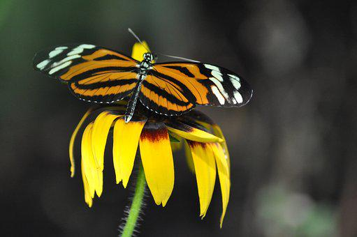 Nature, Insect, Butterfly, Outdoors, Wild World, Wing