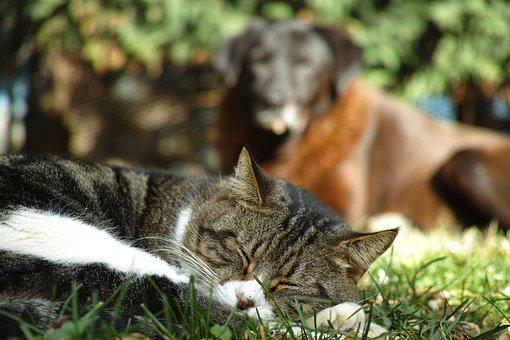 Animals, Nature, Mammals, Cute, Park, Cat, Dog, Sleep