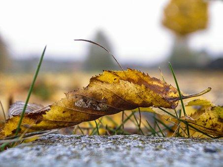Nature, Leaf, Plant, Macro, Macro Photography, Close