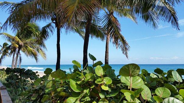 Palm, Beach, Tropical, Seashore, Island, Ocean
