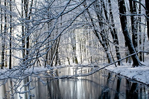 Winter, Snow, Cold, Frost, Tree, Amsterdam