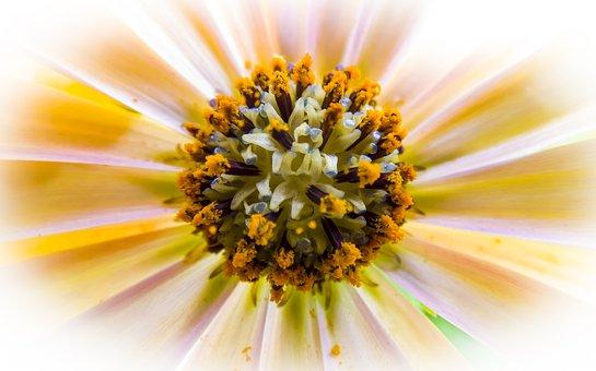 Flower, Nature, Color, Approach, Plant, Garden, Petal