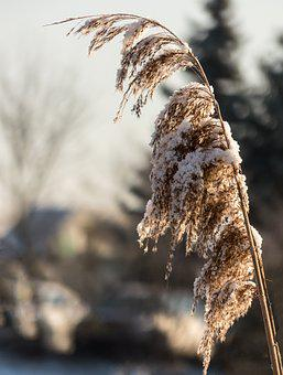 Nature, Winter, Snow, Frost, Close, Cold, Background