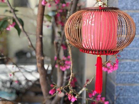Lantern, Plant, Chinese, Flower