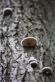 Fungus, Wood, Mushroom Wild Rice, Nature