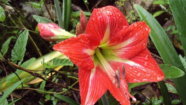 Nature, Plant, Leaf, Flower, Garden, Outdoors, Approach