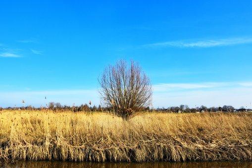 Reed, Wetlands, Tree, Lonely Tree, Landscape