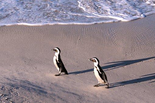 Penguin, Nature, Sand, Sea, Coast
