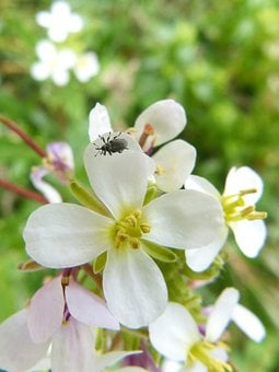 Insect, Tiny, Weevil, Nature, Flower, Plant, Leaf