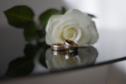 Flower, Closeup, Romantic, Beautiful, Rose, White Rose